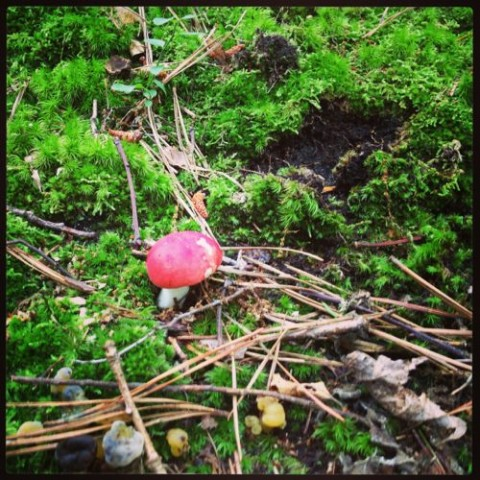 a Russula mushroom -- or maybe a Lactaria...